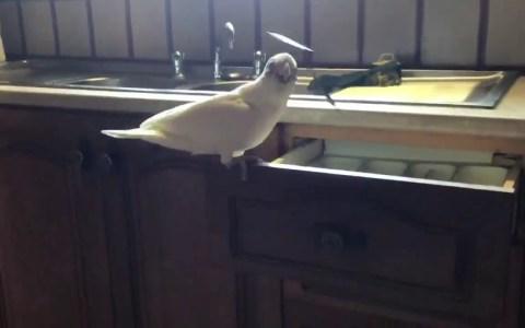 Cuando te obligan a poner la mesa pero eres un pájaro