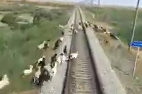 No sé si ha sido muy buena idea tocar la bocina del tren, visto el resultado...