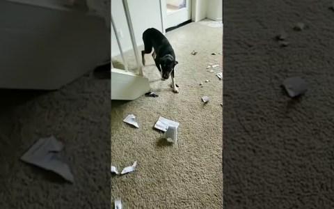 Parece que el libro de adiestramiento canino está funcionando