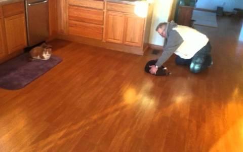 El gato-curling