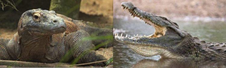 Algunos animales aunque se parezcan mucho tienen menos relación genética de la que te imaginas