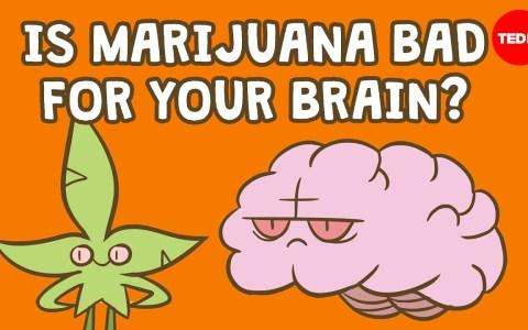 ¿Qué le hace la maría a tu cerebro?