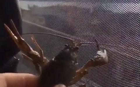 Salvando a un cangrejo: Todo mal