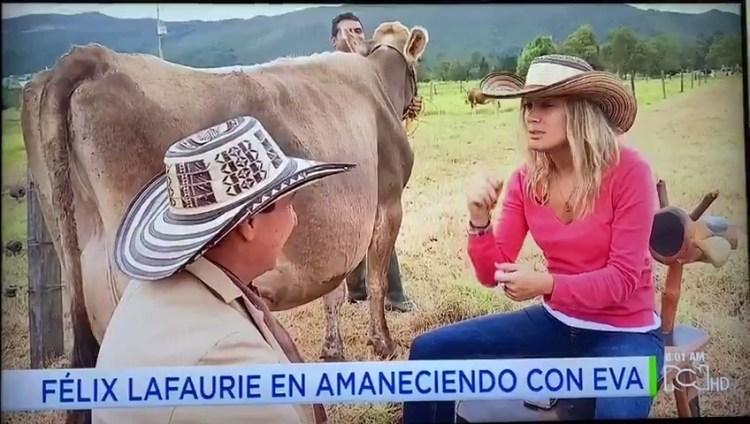 Una chica de ciudad bebiendo leche por primera vez directamente de una ubre