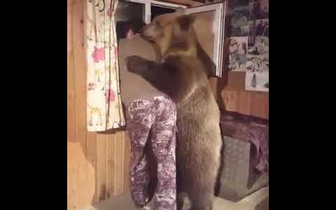 Emotional Support Bear: El oso que está ahí cuando lo necesitas