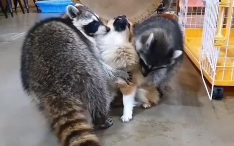 """""""Oh perrete marrón, cuéntanos tu secreto para ser tan suave"""""""