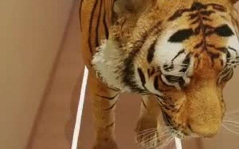 ¿Sabías que Google genera modelos 3D de animales que puedes integrar en tu casa con realidad aumentada?