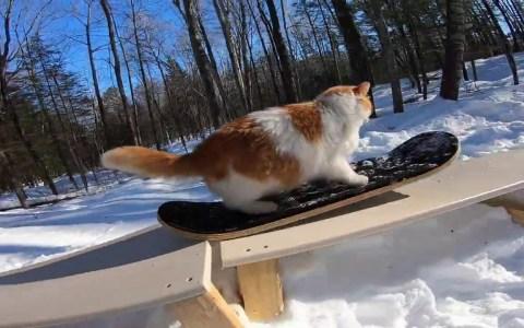 El mejor vídeo que vas a ver (y el único) de un gato haciendo snow en una tabla de skate