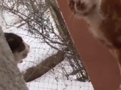 Dos gatos debaten sobre la importancia de la educación de calidad en una democracia