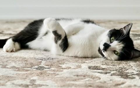 Si no tienes ni has tenido gatos, no sabías que los gatos tienen un sonido de activación característico