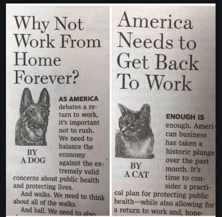 """Gatos vs perros siendo """"objetivos"""""""
