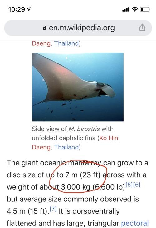 ¿Conocías a la Manta Raya Gigante?