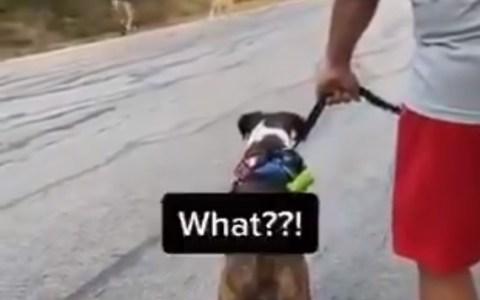 Si los perros pudieran hablar