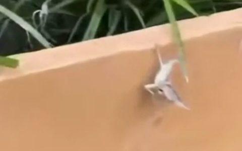 Este lagarto vive la vida a tope