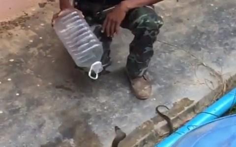 Capturando sosegadamente una cobra usando únicamente una garrafa de 5 litros de agua
