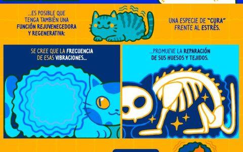 """El ronroneo gatuno, uno de los signos de placer más reconocibles del mundo animal… y una especie de """"cura"""" frente al estrés"""
