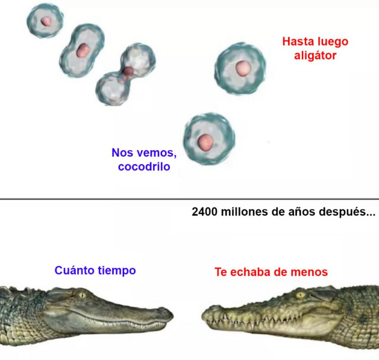 La evolución creó las relaciones largas a distancia