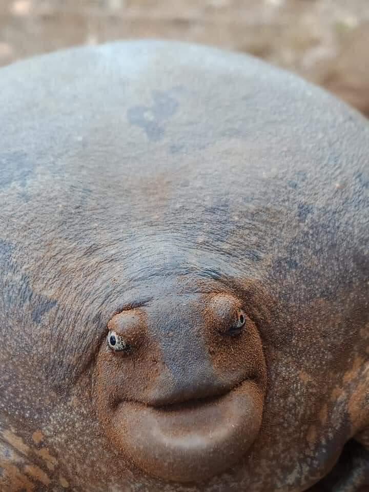 ¿ Rana o tortuga?