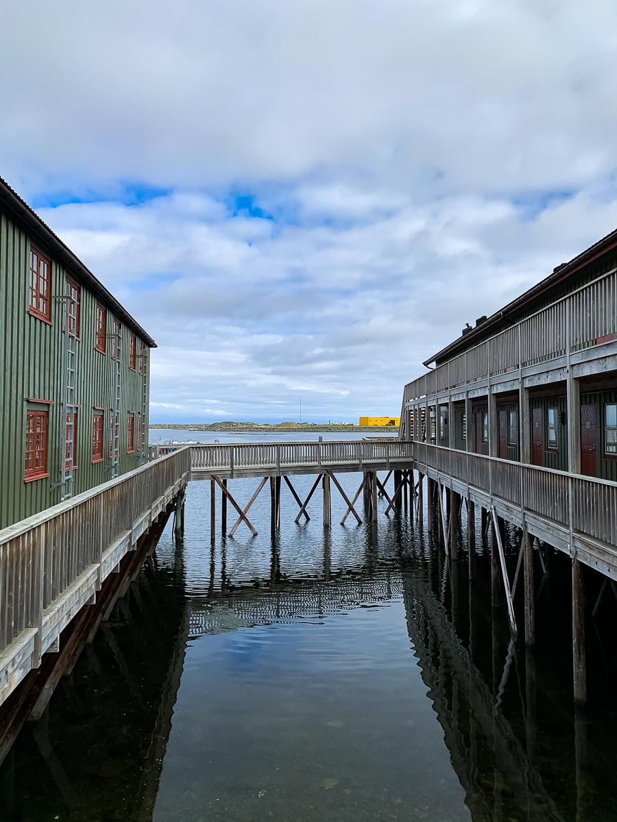 Wieloryby Norwegia