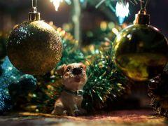 Здравствуй, ёлка, Новый год — ипотека у ворот!