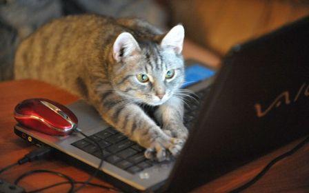 Как подать онлайн заявку на предоставление кредита наличными