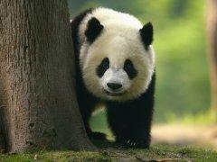 Обзор экологичной панда-карты WWF от банка Тинькофф