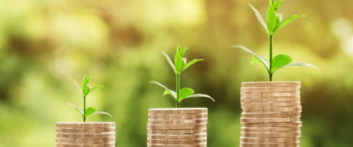Managing Investments: Prune the weeds and nurture the roses