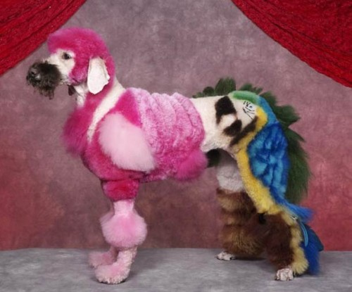 cosplay-body-painting-for-dog-5