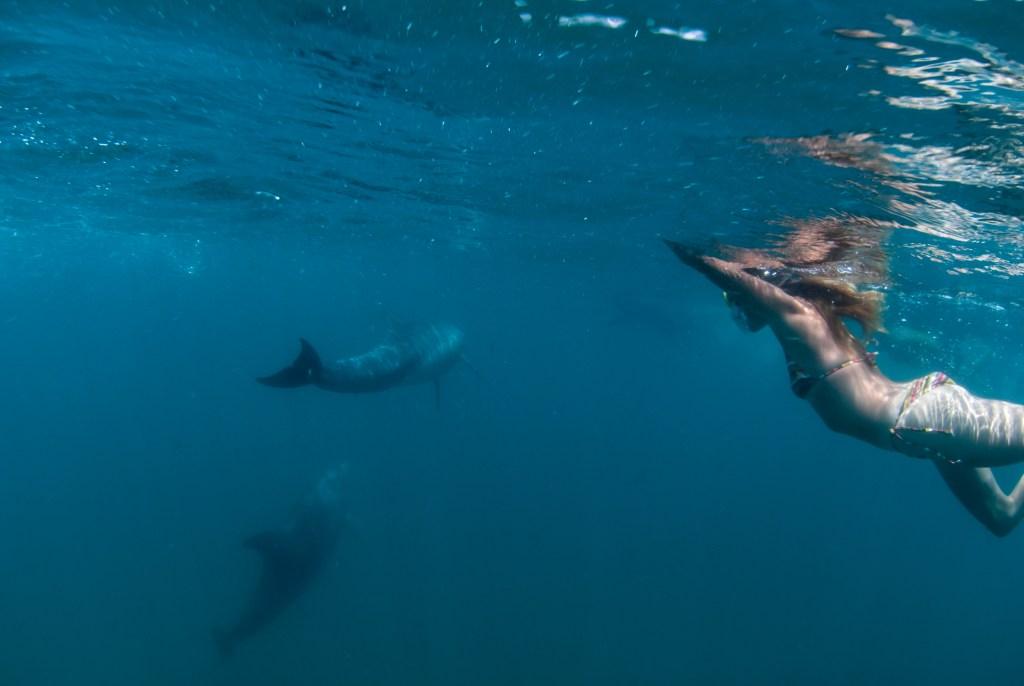Whale-Sharks-SC-174.jpg