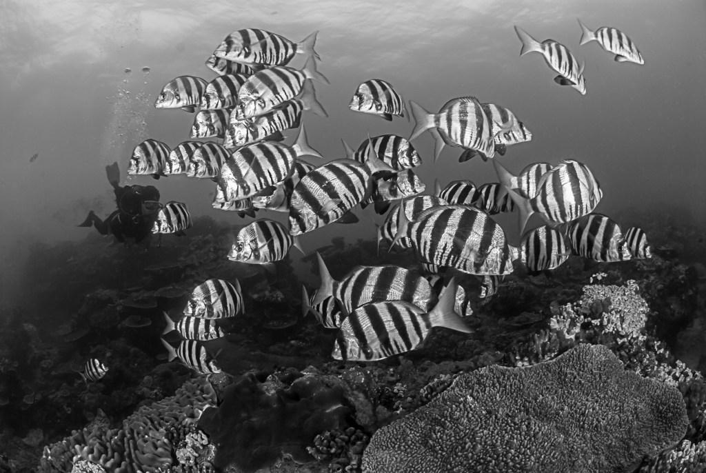 bw-zebra-fish-2.jpg