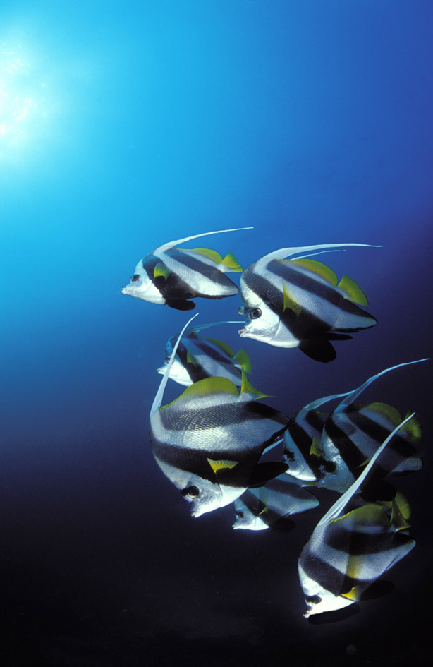 underwater photography secrets of the trade
