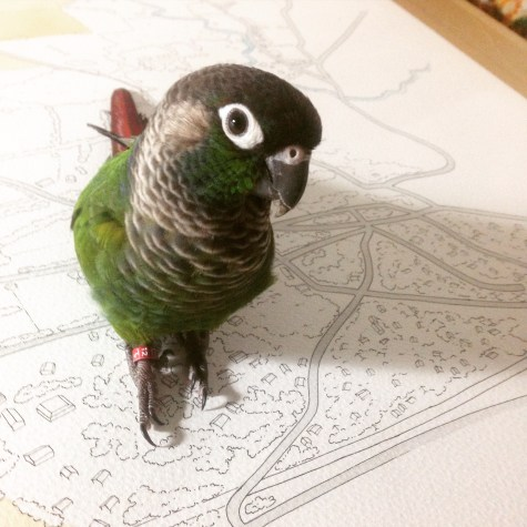 Lily the Studiobird