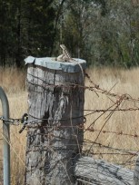The front gate to the property where I live - with the new self-appointed guardian!!