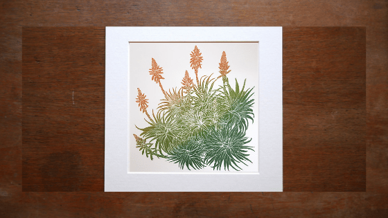 Flowering Aloe. Aloe arborescens. Also known as The Torch Aloe and the Candelabra Aloe.Mounted woodcut print 70cmx70cm. By Fiona Parrott printmaker. Fiona Parrot prints.