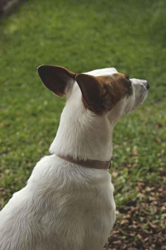 Fotografando meus cães