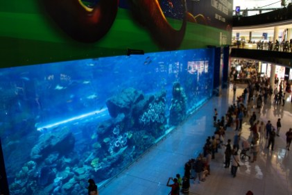Aqurium in der Dubai Mall.