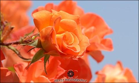 Enchanting Blooms7