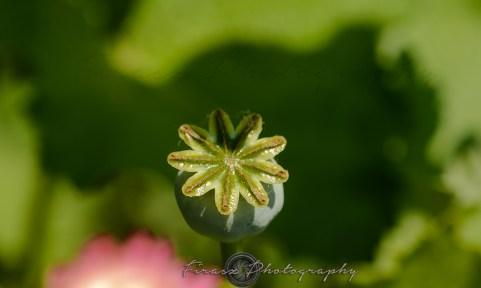 Kashmir Bouquet11-ball-like flower