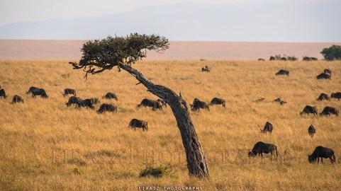 Trees of Mara3