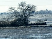 Beautiful, sunny day, winter, cold, Southwest Louisiana;