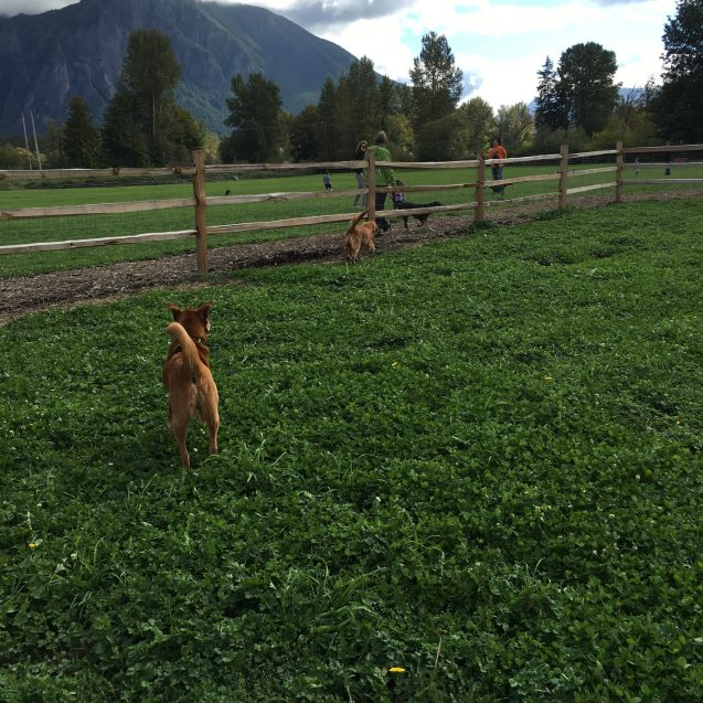 Three Forks Dogs Park in Snoqualmie, Washington