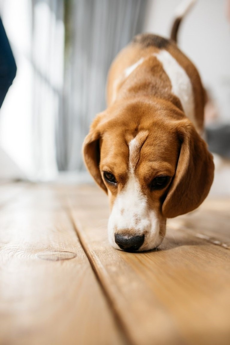 How Dogs Help Sniff the Dry Rot in Your Home