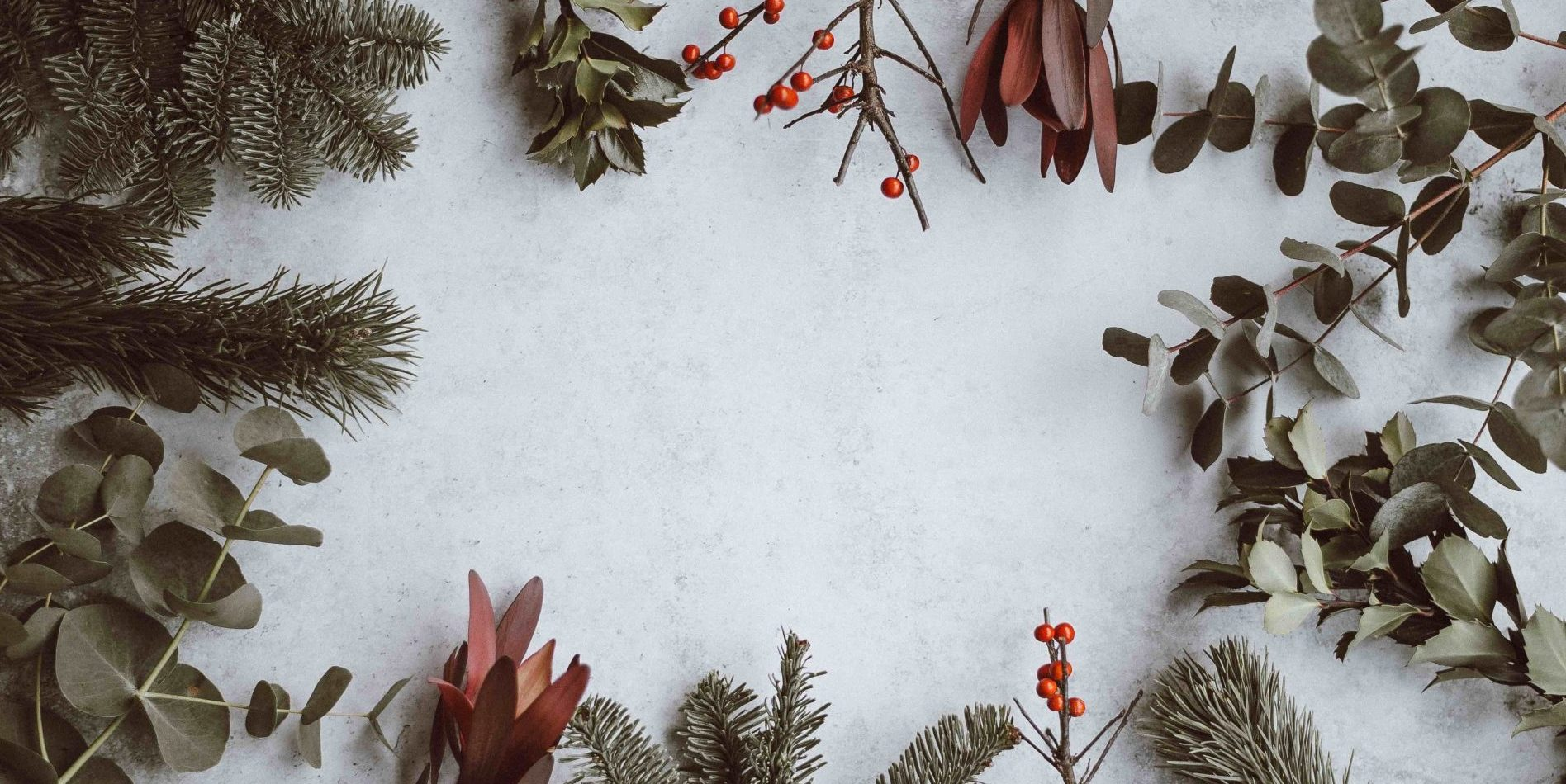 Christmas foliage on a white background