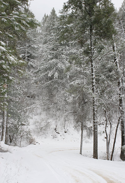 At an even lower elevation, the sun finally came out, and the snow-covered