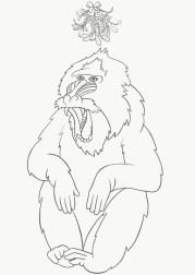 04_baboons