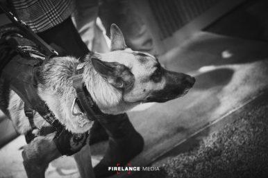 Firelance Media-0814