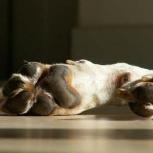 Canestra Biotin til hunde - 150 g