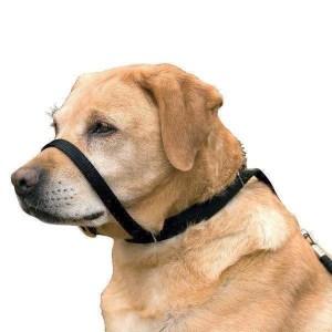 Canny Collar, anti-træk grime halsbånd