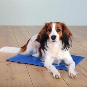 Kølemåtte til hunde, blå, 100 x 60 cm