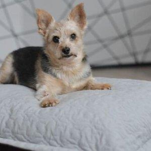 BOB Cloud Pillow Classic Dog